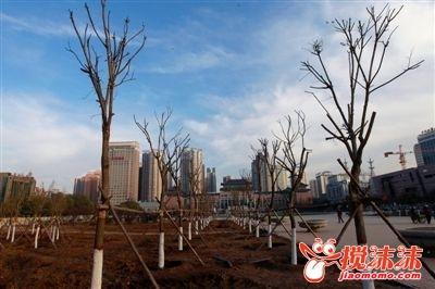 西宁街景改造 春闻花香冬见绿 西宁茶座 西宁搅沫沫社区图片