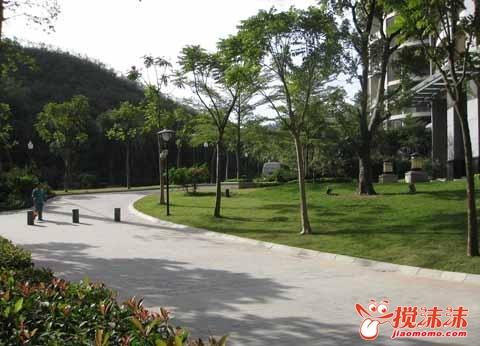 居民 二机小区绿化带何时建 开发商有答复 西宁茶座 西宁搅沫沫社区图片