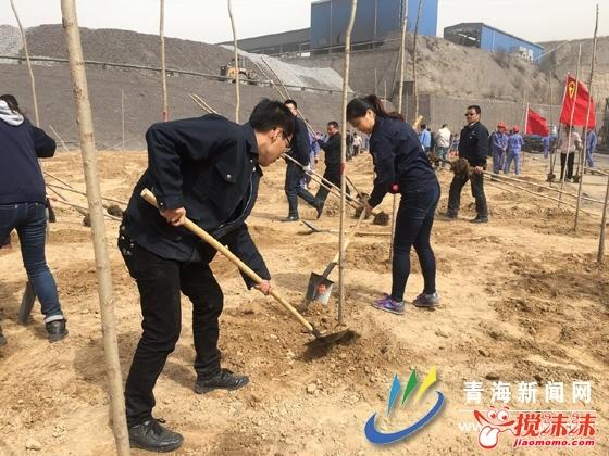 青海首个 青年之声 青年林落户西钢 西宁资讯 西宁搅沫沫社区图片