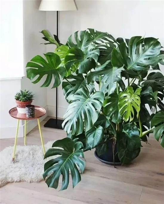 西宁人这八种家居植物帮你打造秘密花园