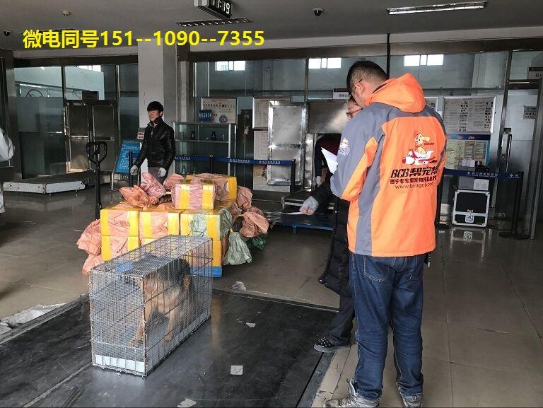 西宁宠物托运李强 (2).jpg
