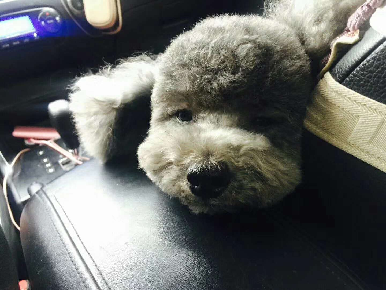 【重金寻狗】狗狗金卡10.13日晚10点在海湖广场跑丢 麻烦网友们帮忙找找