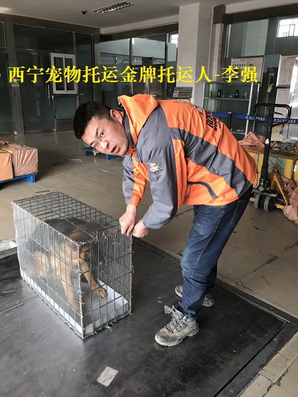 A西宁宠物托运人李强 (7).JPG