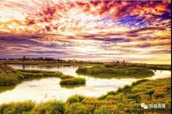 格尔木胡杨林-青海3个地方被国家看上,来看看是哪里 西宁茶座 西宁