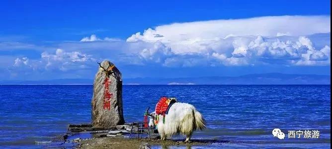 【公告】青海湖旅游集团决定暂停鸟岛景区、沙岛景区内的一切旅游经营活动