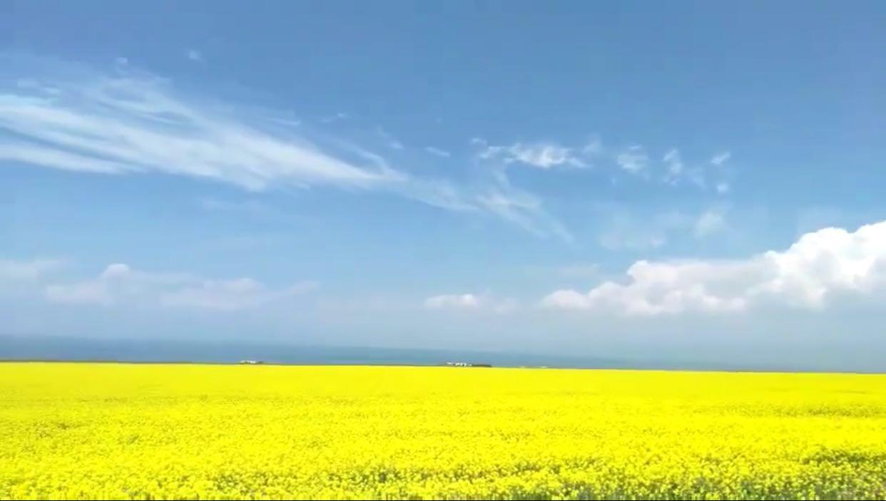 七月去西宁这个看万亩油菜花海,路程不到三十公里