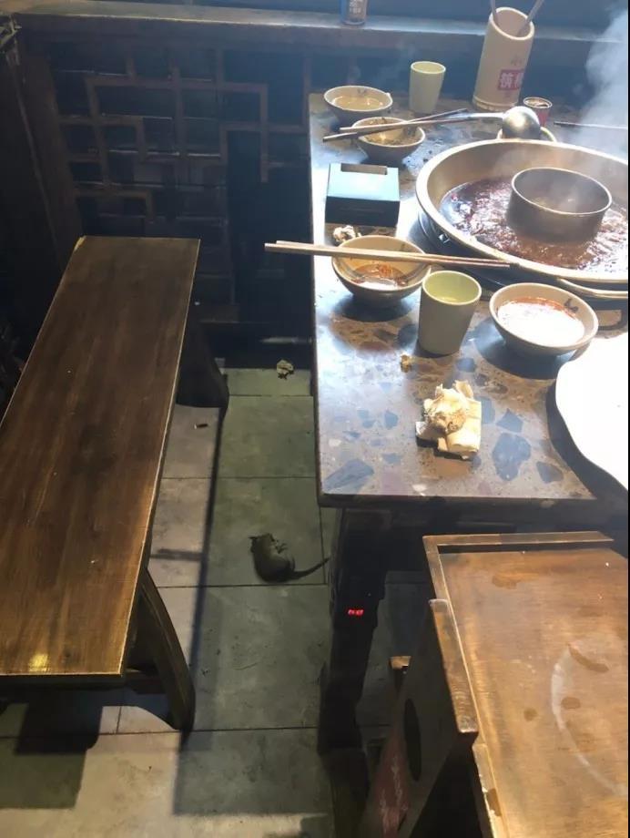 """西宁某""""网红""""火锅店惊现老鼠!"""