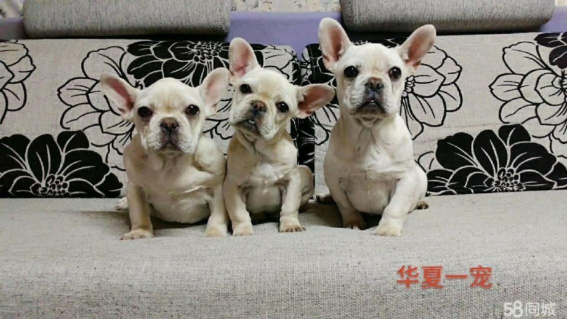 华夏一宠宠物服务有限公司(法牛篇)