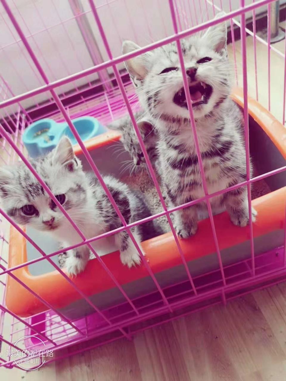 出售各种小猫
