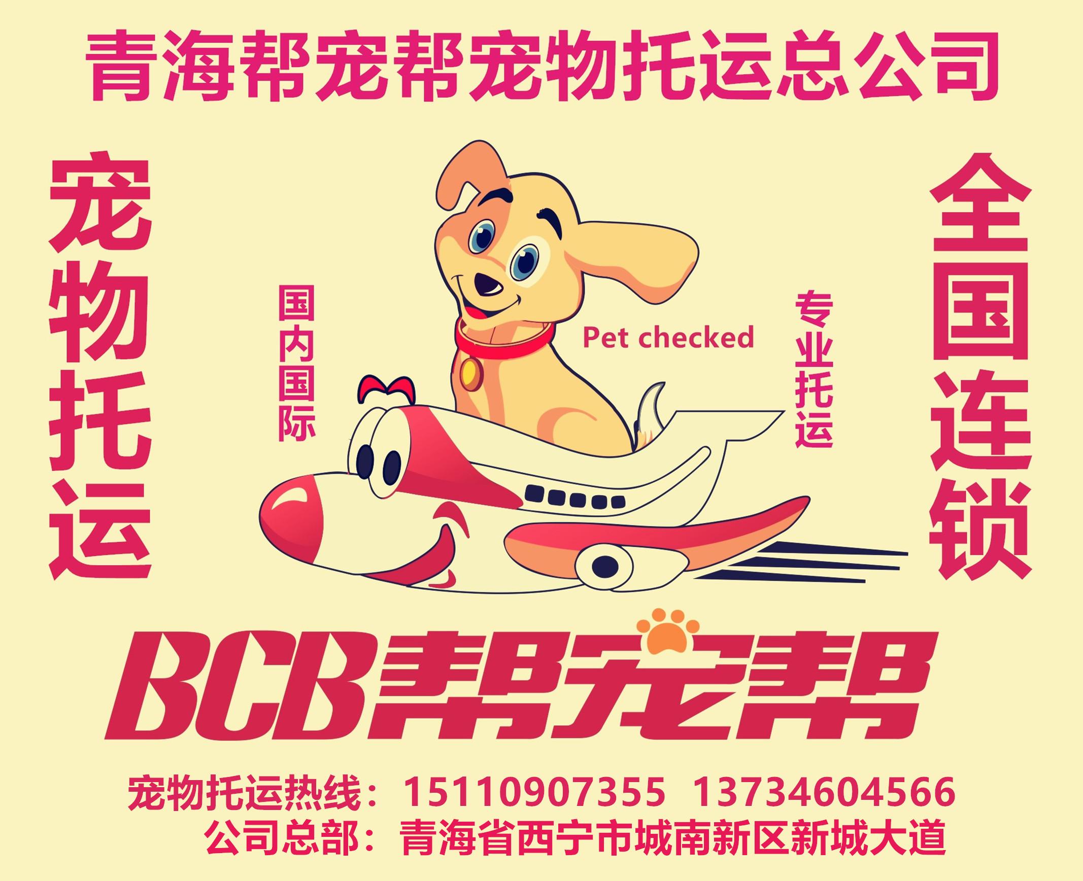 西宁帮宠帮宠物托运公司友鑫宠物托运